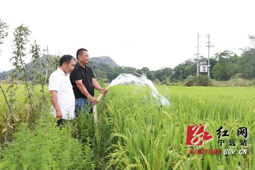 【我为群众办实事】宁远:向地要水抢插晚稻 及时雨缓解旱情2_副本500.jpg