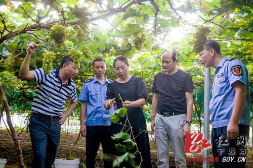 宁远:强化鲜果产业知识产权保护链 助力乡村振兴发展_副本500.jpg