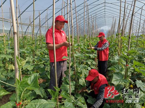 宁远:反季蔬菜助农富_副本500.jpg