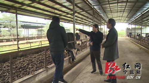 宁远:畜牧水产部门将畜禽防寒过冬记心上_副本500.jpg